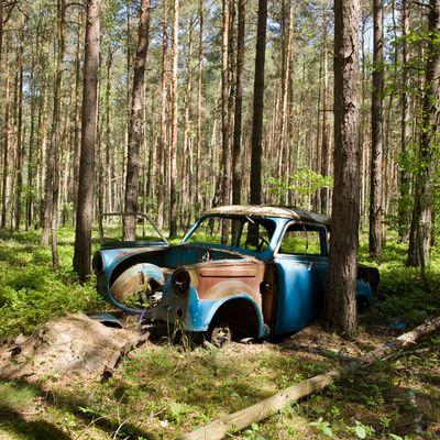 Trabi im Wald