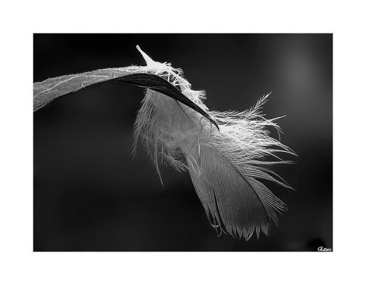 Tracce di angeli