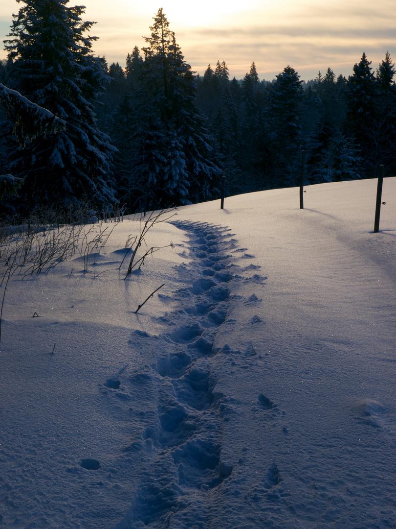 Trace dans la neige