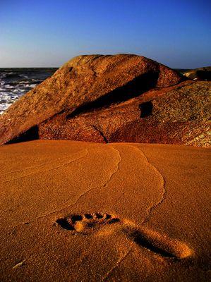 trace sur le sable