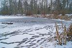 traces à la mare aux évées, forêt de fontainebleau
