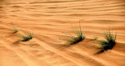 traces de roues dans le sable.