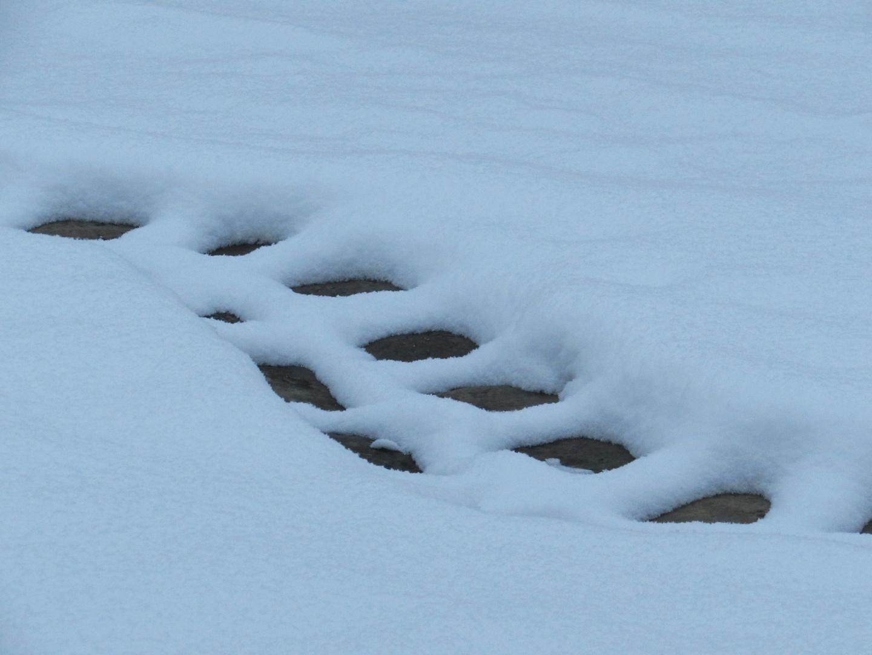 ..Traces, la neige ne tenait pas sur les pavés du jardin...