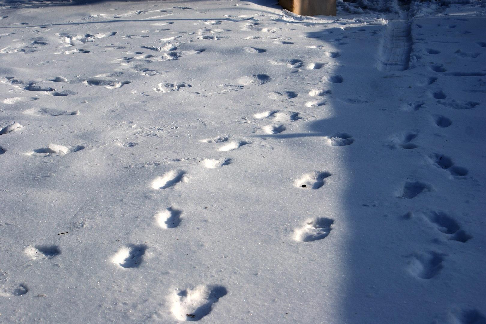traces sur la neige