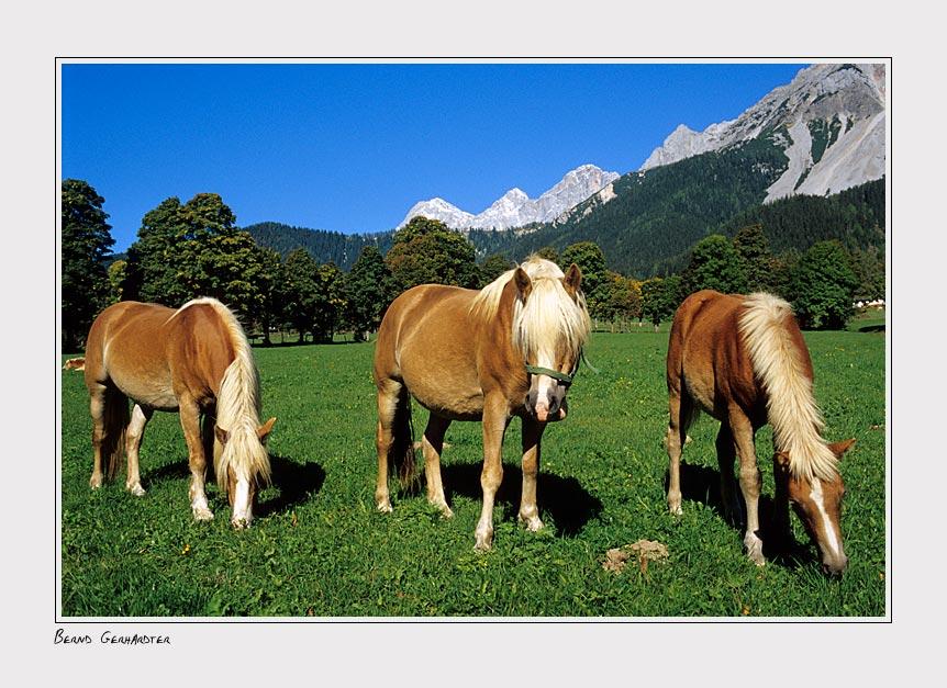 Tradition Pferd