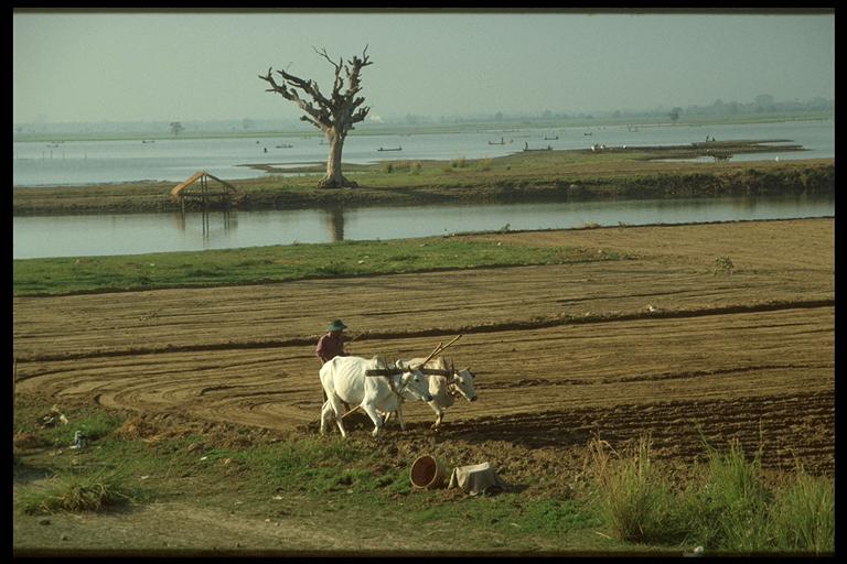 Traditionelle Landwirtschaft in Amapura am Lake Taungthaman