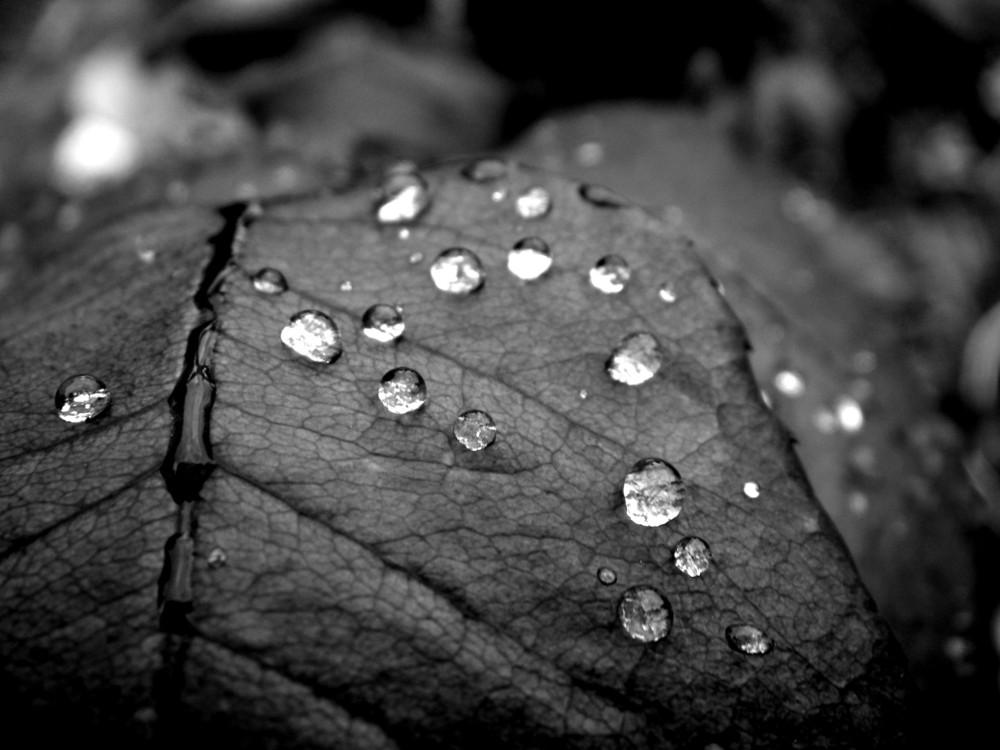 Tränen der Natur