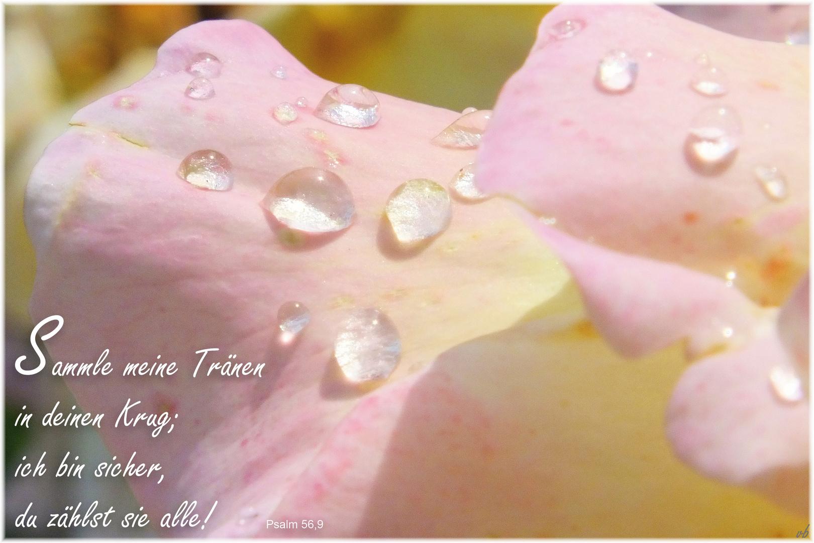 Tränen....Psalm 56,9