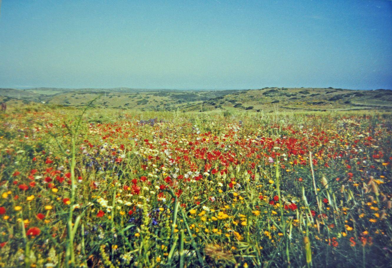 Träume vom Frühling in Portugal