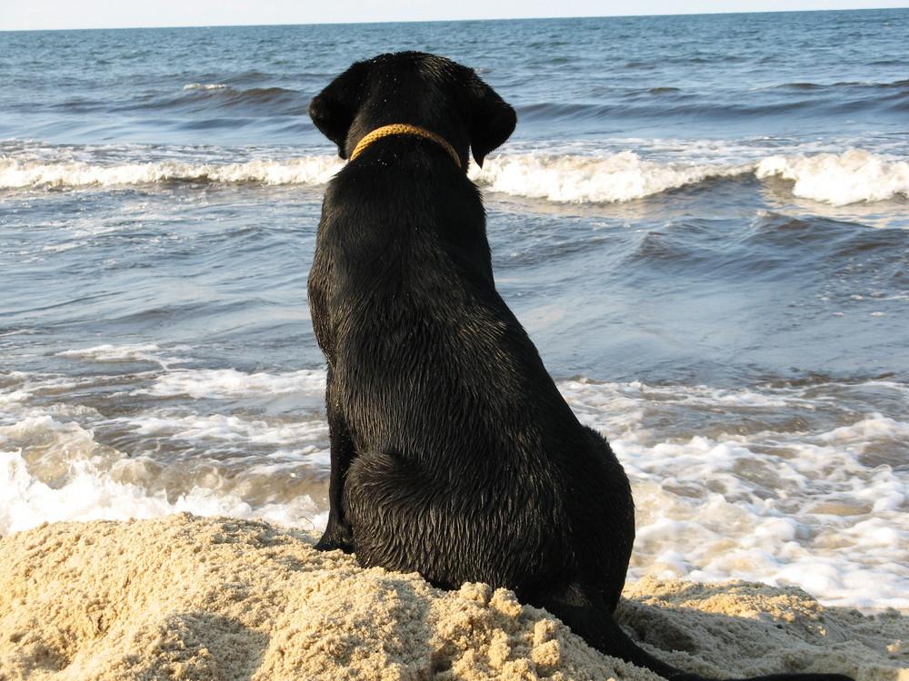 Träumen vom Meer ...