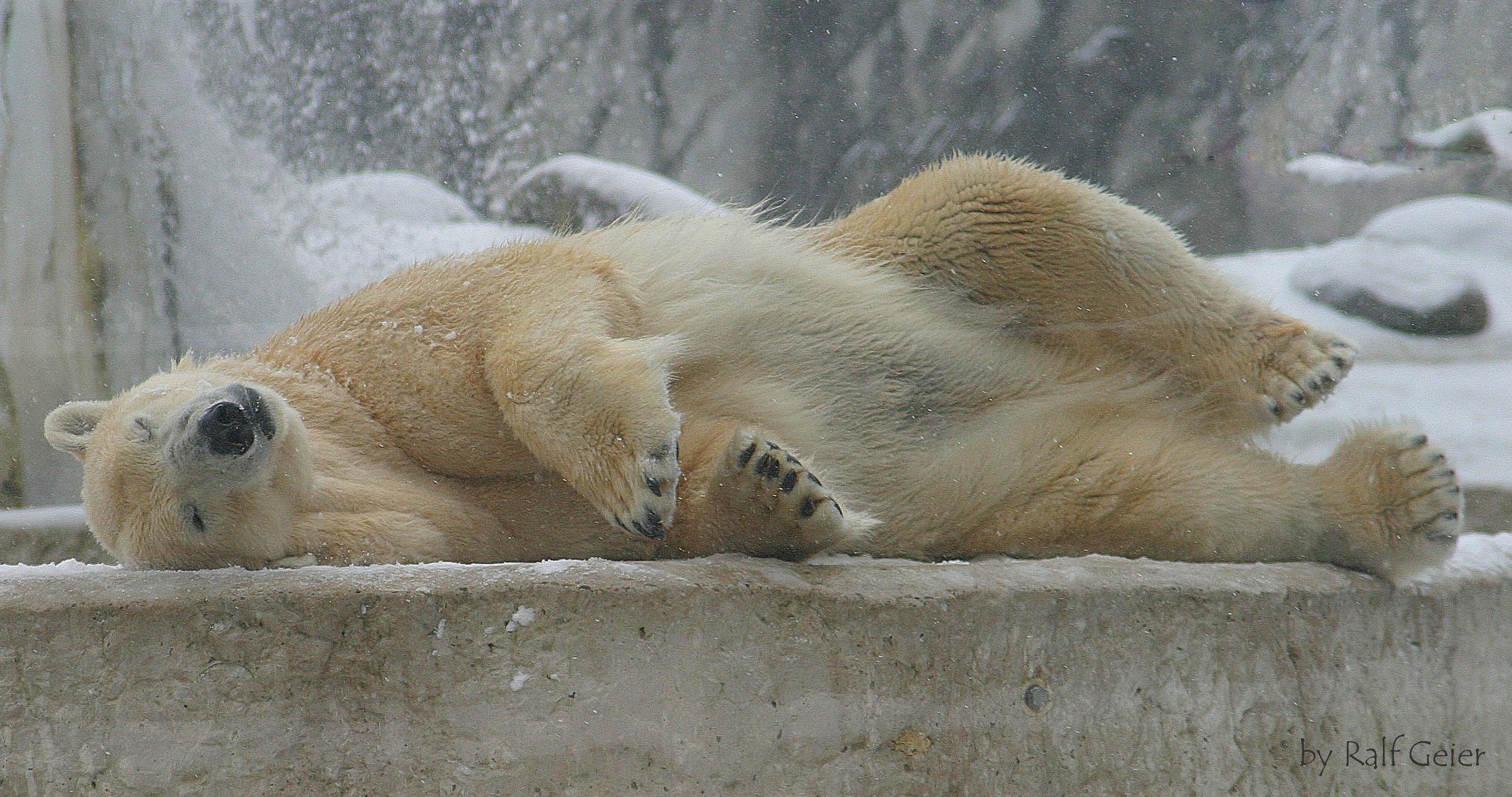 träumen vom Schnee :-)