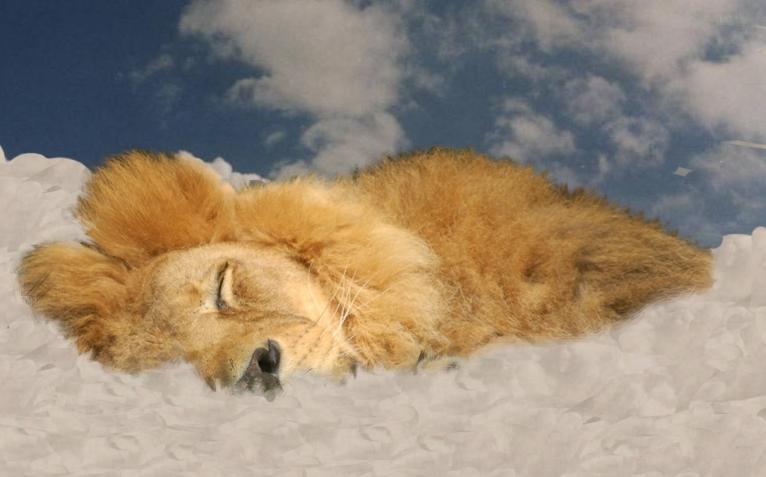 träumender Löwe