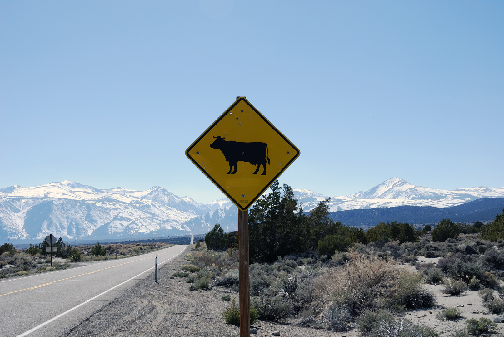 Traffic sign with cow