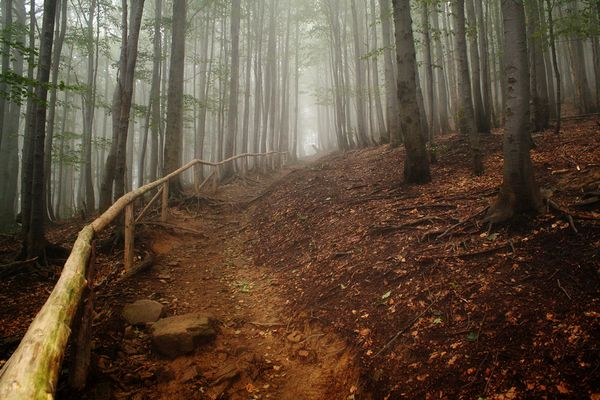 Trail in the fog