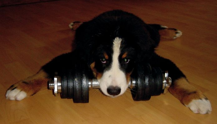 Training!