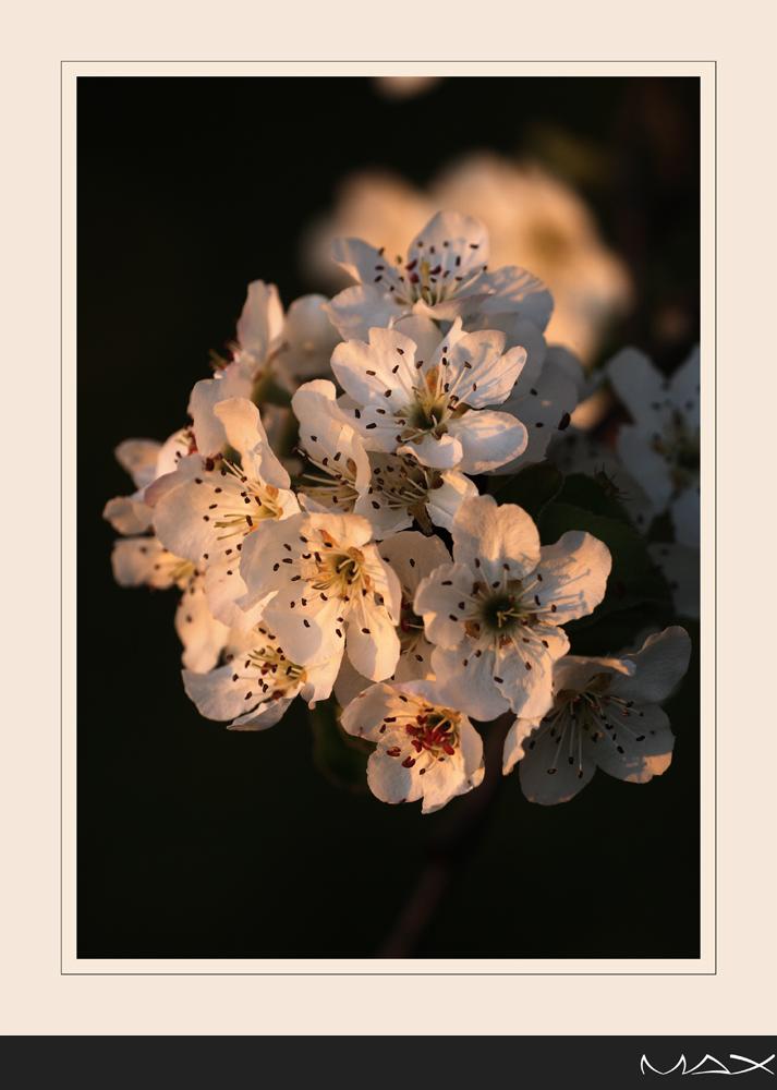 Tramonto che accarezza la primavera
