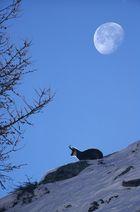 Tramonto di luna.
