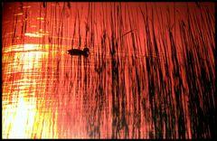 Tramonto in laguna...8