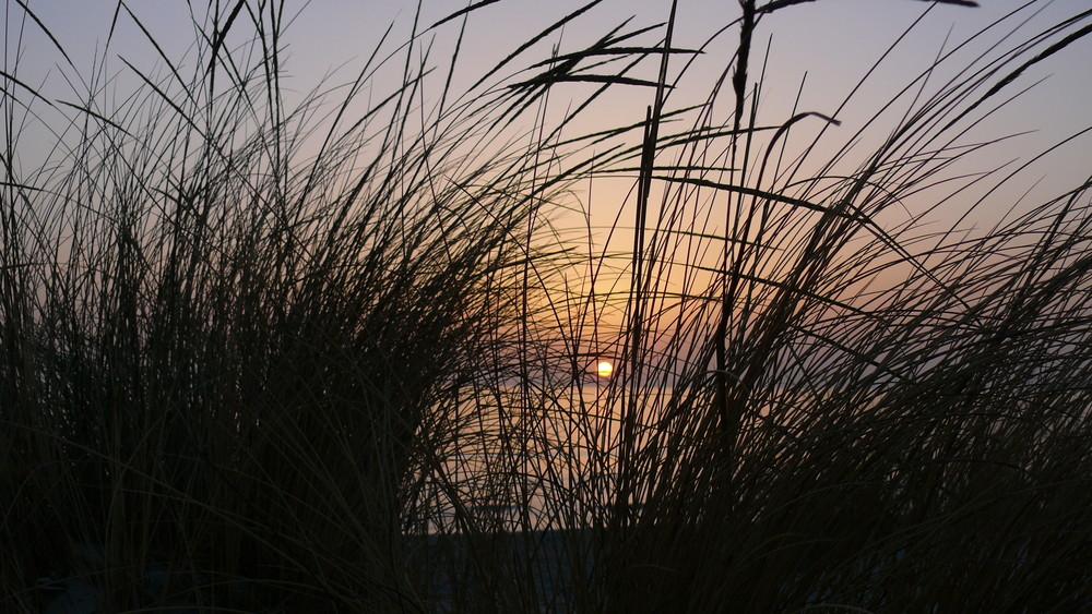 tramonto portopino dalle dune tra i cespugli