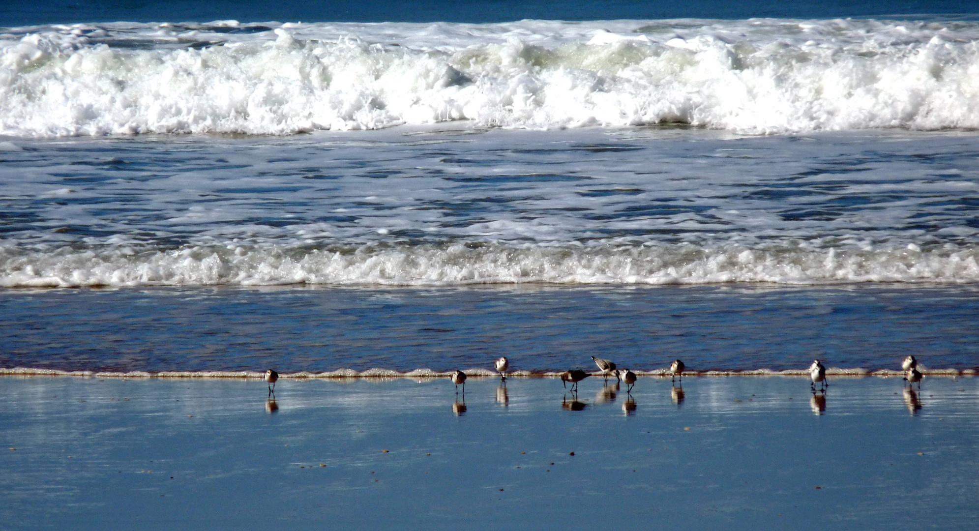 Tranche napolitaine de mer ...