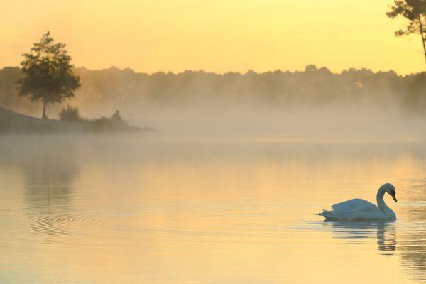 Tranquilité matinale