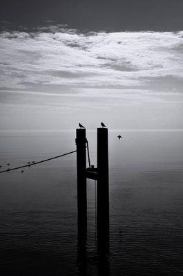 Tranquillité assourdissante