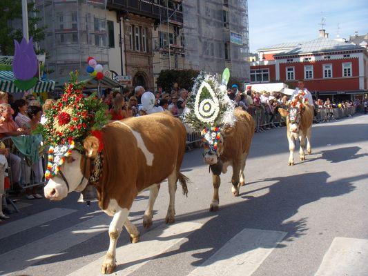 transhumance des vaches à Kufstein (Autriche)