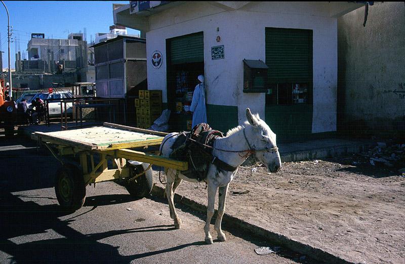 Transportuntenehmen in Hurghada