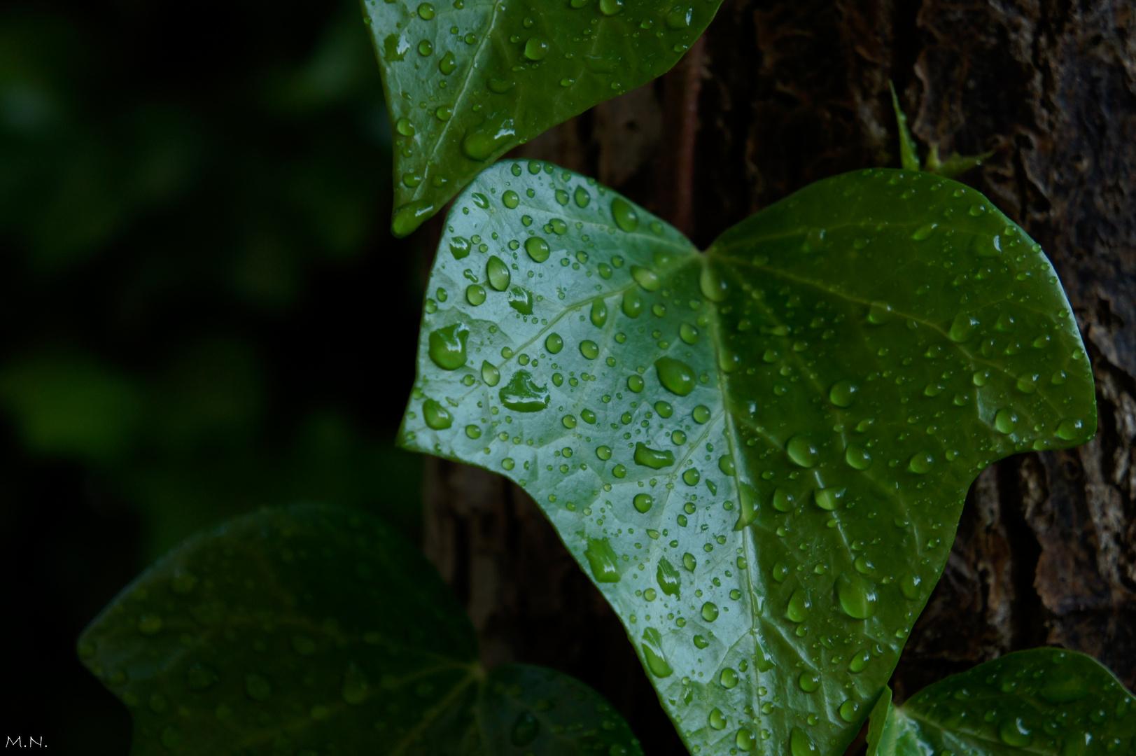 tras a lluvia