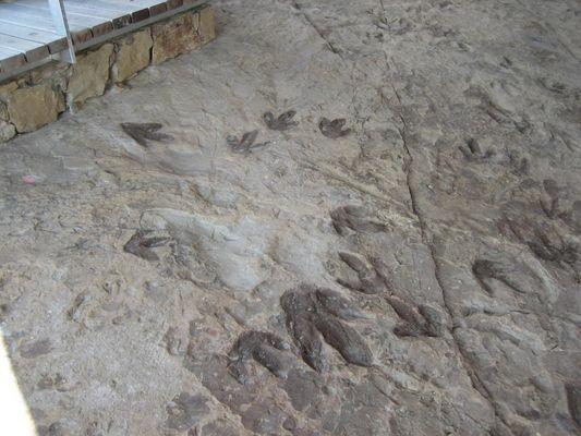 Tras las huellas de los Dinosaurios