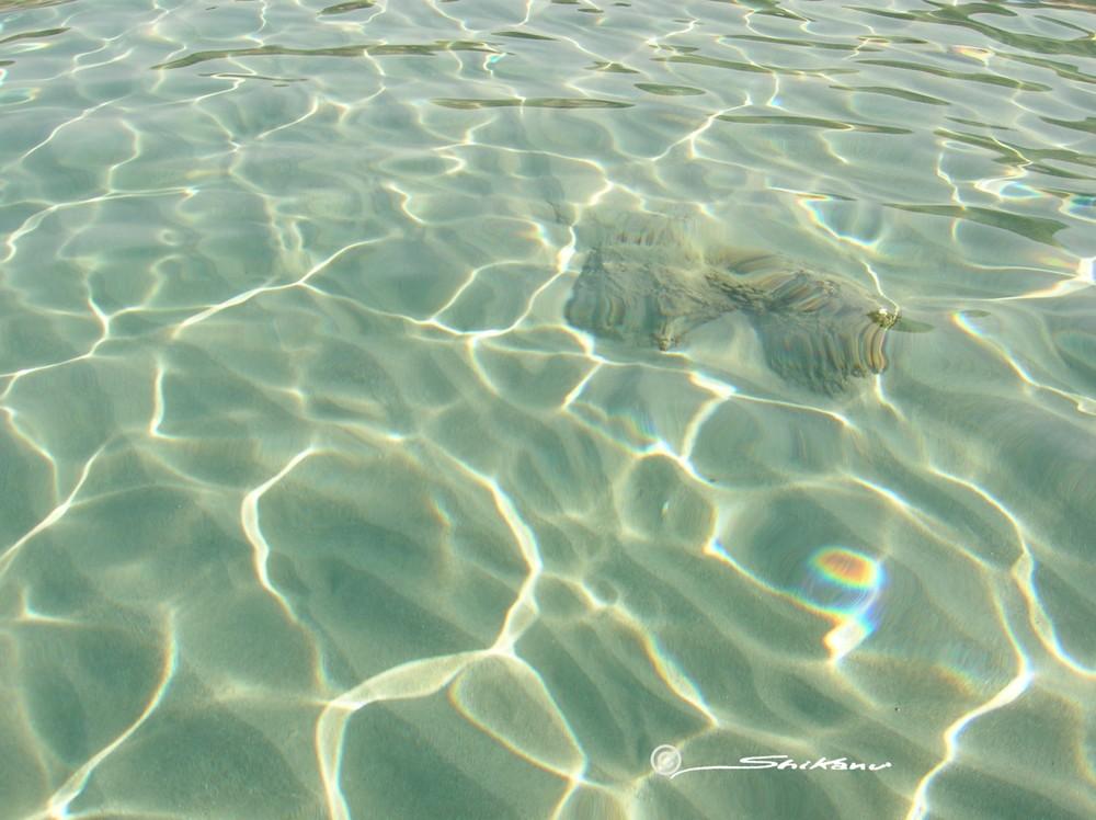 trasparenze di Sardegna