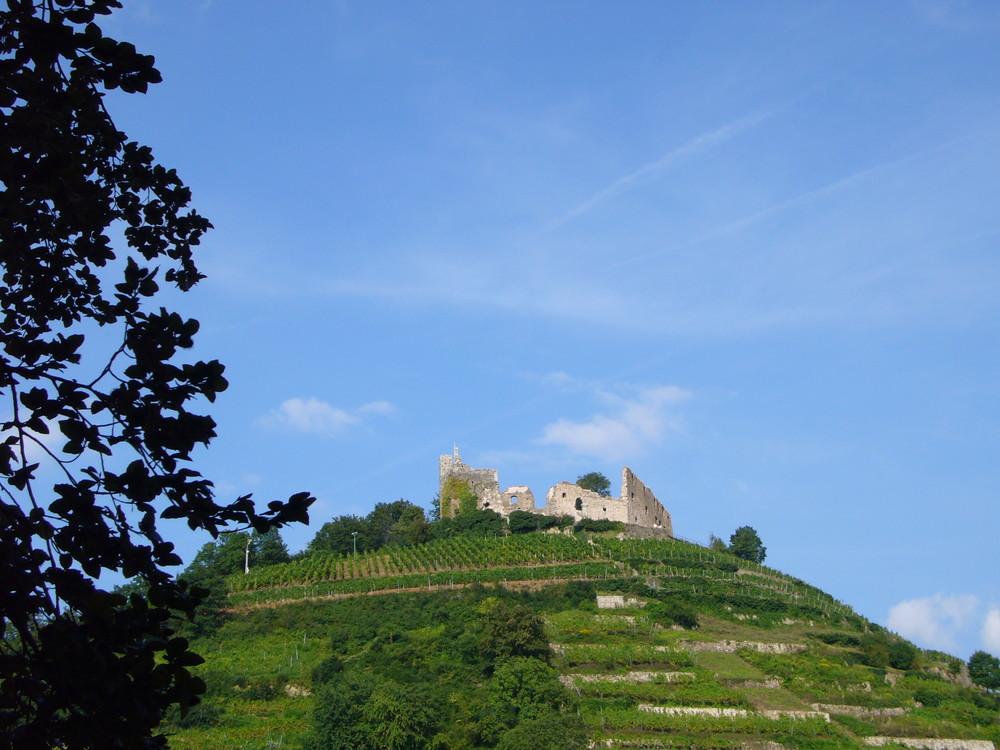 Trauben Burg