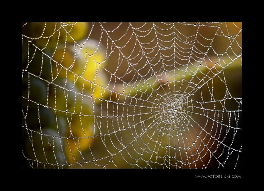 Trauben hinter  Netzen