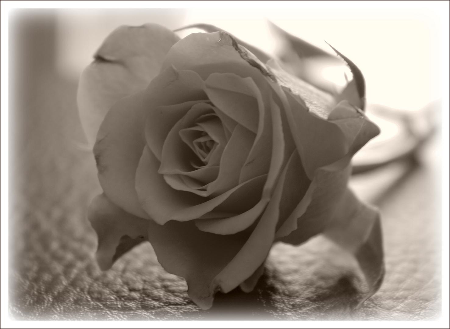 Trauer Foto & Bild | pflanzen, pilze & flechten, blüten ...