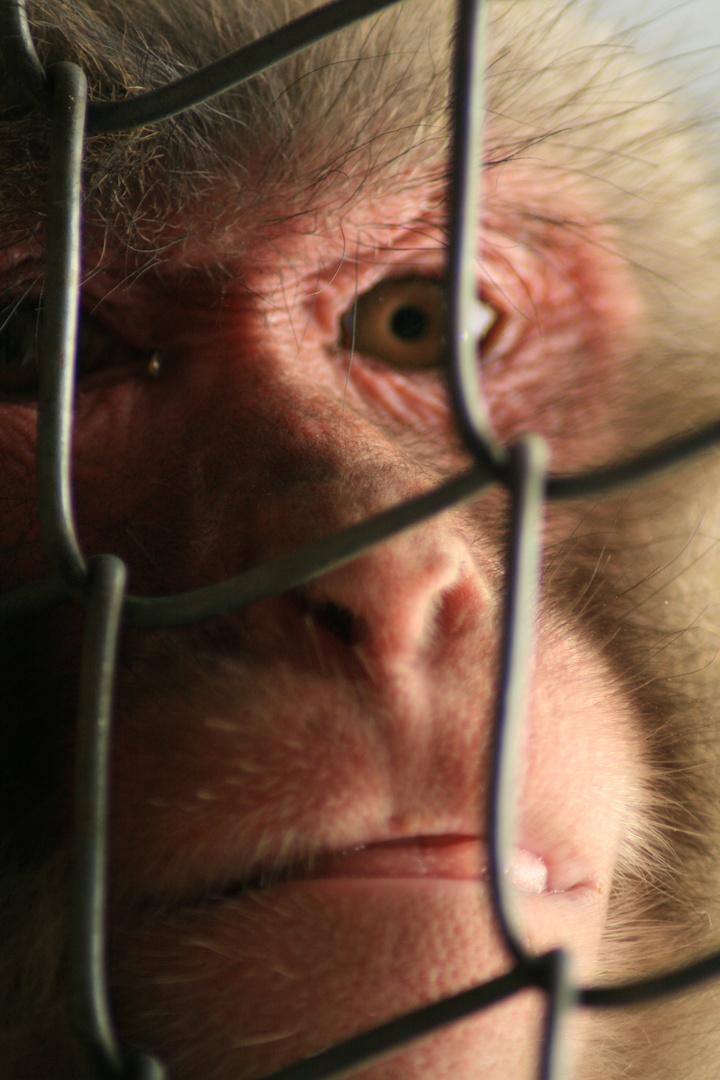 Trauer in Gefangenschaft