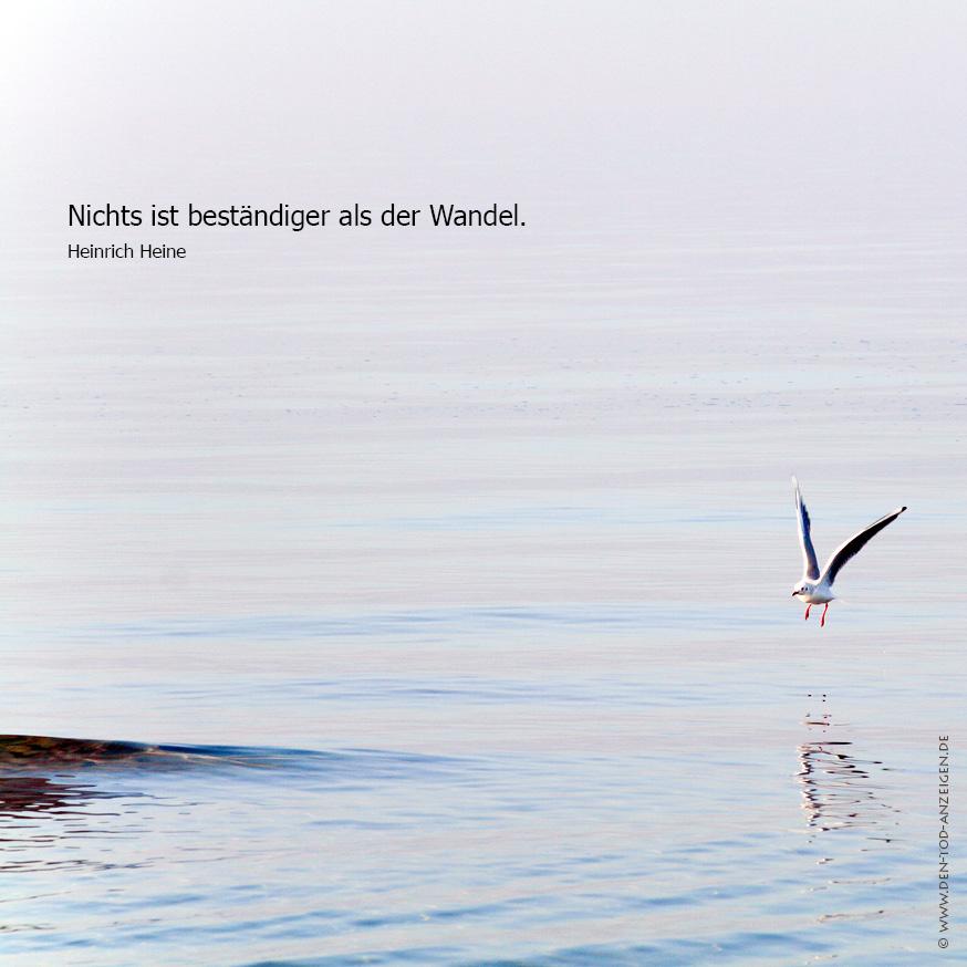 Trauerkarte mit Möwe Foto & Bild | trauerkarten, trauer ...