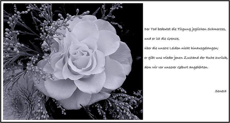 Trauerkarte: Trost (87.945 Klicks)