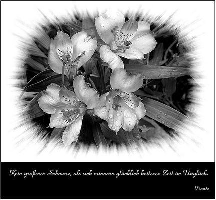 Trauerkarte: Wehmut