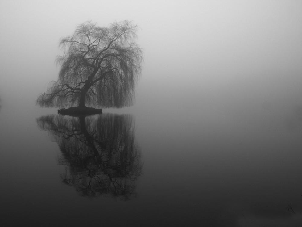 Trauerweide im Nebel