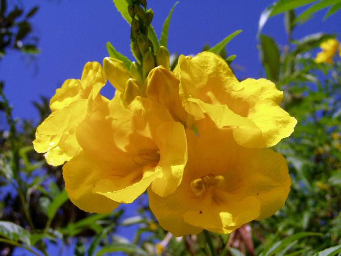 Traum in gelb