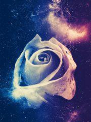 Traum -Rose