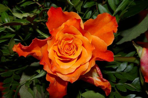 Traum von Orange
