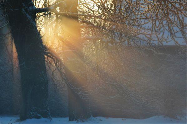 Traum - Zauber - Baum