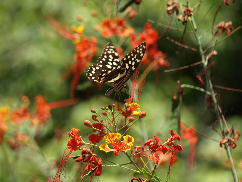 Traumhaft schöner Schmetterling in Kenia