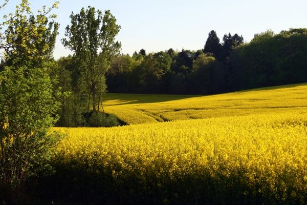 Traumhaft schönes Feld...
