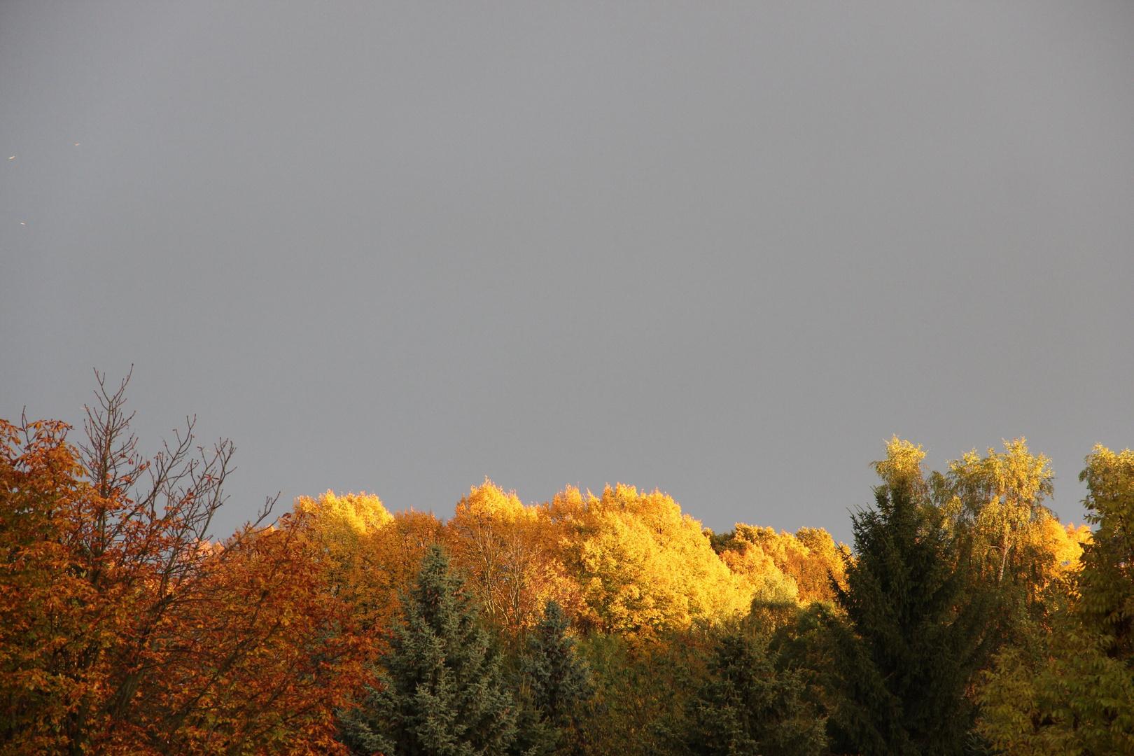 Traumhafte Baumfärbung