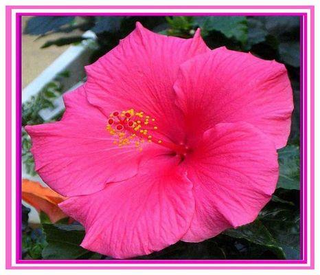 Traumhafte Blume.