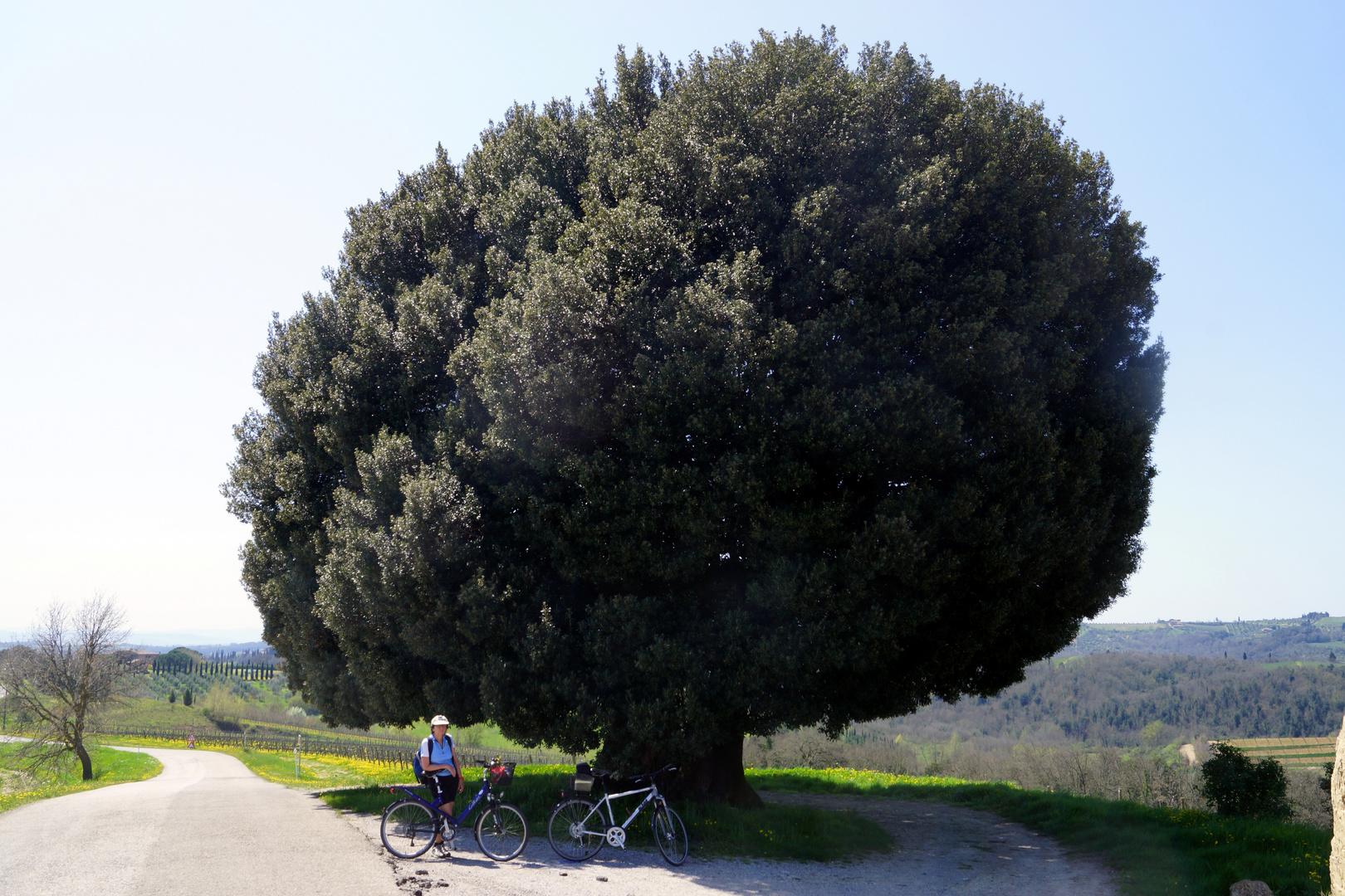 traumhafte Radtour in der Toskana