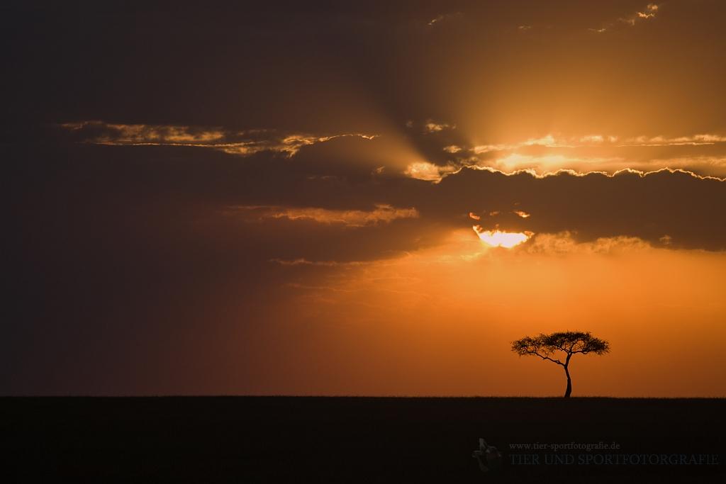 Traumhafte Sonnenuntergänge ....