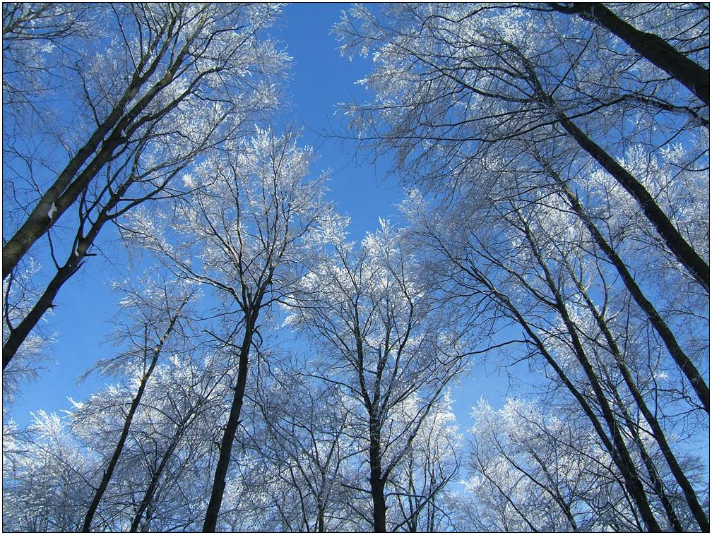 traumhafte Winterlandschaft IV